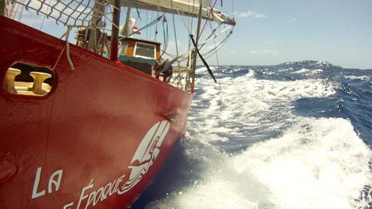 Und doch gehören Langkieler in den Southern Ocean