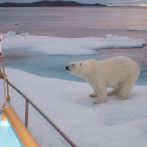 Eisbärbegegnung in der Nordwestpassage